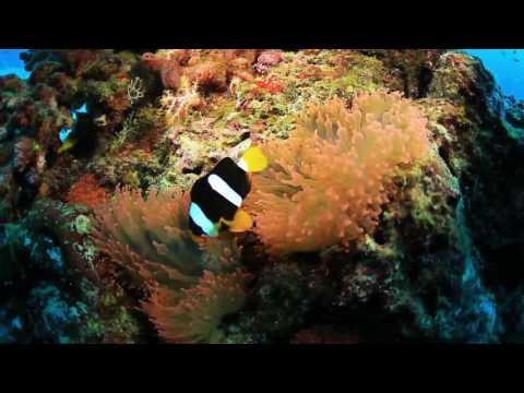 Thailand Underwater Paradise