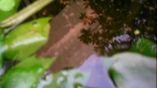 ひょうたん池のめだかくん。ひさしぶりに撮影。おっ元気に泳いでいるじ...