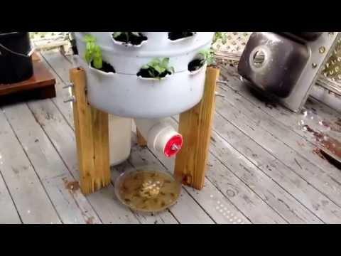 My 55 Gallon Garden