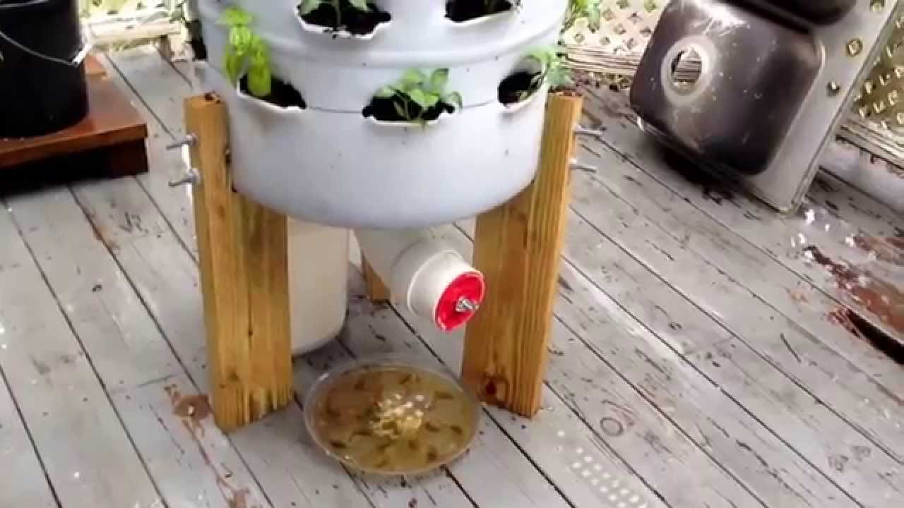 My 55 Gallon Garden   YouTube