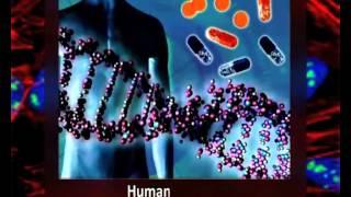 Nucleolus   Structure & Organisation