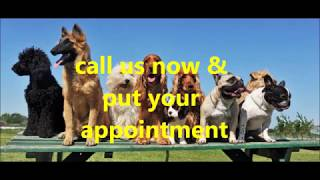 Dog grooming st albens|call now +441727224588