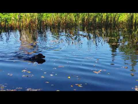 GSP 6 Month First Learn Ducks Hunting