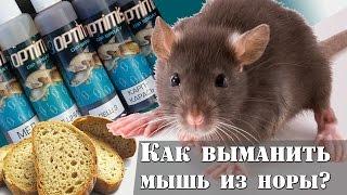 Как выманить мышь из норы? Приколы на рыбалке : РД