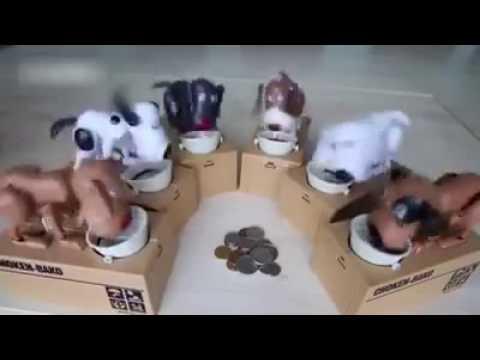Dog Coin Money Box
