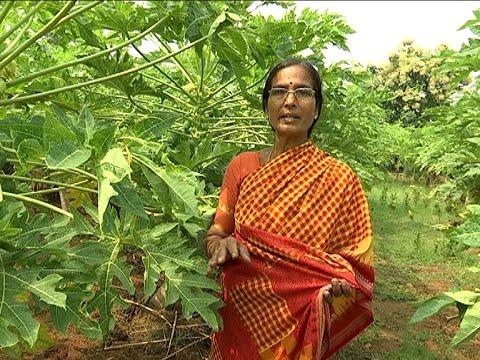 Woman Farmer Nagalaxmi  Success Story - Agriculture Special || Bhoomi Putrika || Vanitha TV ||