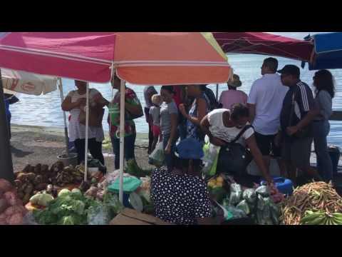 Guadeloupe Pointe à Pitre Marché aux poissons / Guadeloupe Pointe à Pitre Fish Market