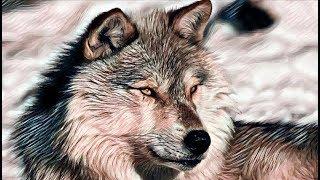 Рассказ о том как волк мальчишку спас. Реальная история