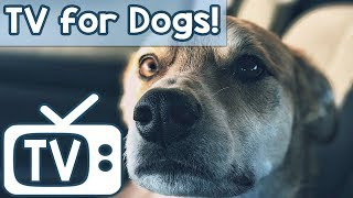 Videos for Dogs to Watch! Calming Squirrels and Birds with Nature Sounds to Help Dogs Relax, Sleep