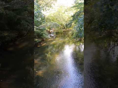 Lynn River in Simcoe, Ontario Canada runs right through the center of my home town.