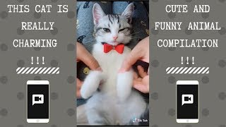 WoW This Cat Is Really Charming | NEW Funny and cute Animal-Compilation | 2018 P.13