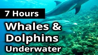 DOLPHIN and WHALE SONG Sounds Underwater Life for 7