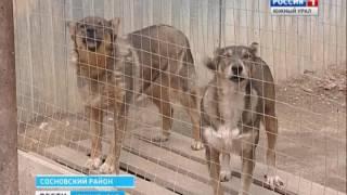 Собачий приют под Челябинском остался без воды