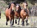I cavalli selvaggi dell'Aveto, risorsa rara da valorizzare