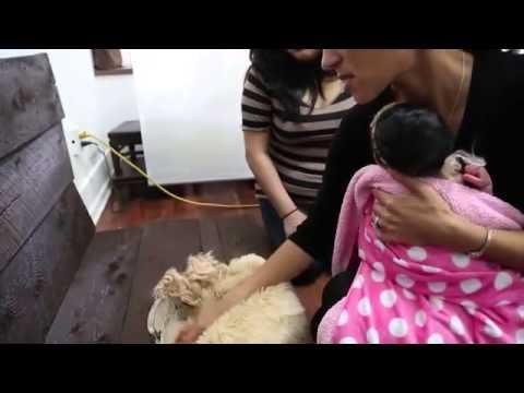 Ветрянка у детей: симптомы и лечение, фото ветряной оспы у