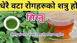 सिस्नु को चमत्कारीक फाईदाहरू Health Benefits Of Nettle leaf    Nepali Health Tips