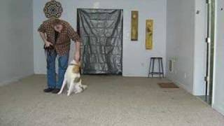 Collie - Dog Bootcamp Training Session - Ohio Master Dog Trainer