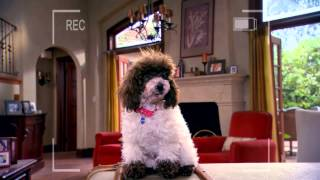 "Dog With A Blog | ""The Puppies Talk"" Sneak Peek 