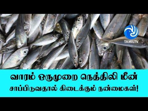 வாரம் ஒருமுறை நெத்திலி மீன் சாப்பிடுவதால் கிடைக்கும் நன்மைகள்! - Tamil TV