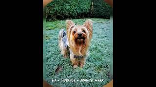 Zym Champion Trick Dog Submission