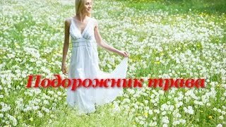 Ольга Зарубина - Подорожник