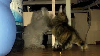 🍓Красивые котята забавно играют дерутся. Спасение котенка благородное дело!