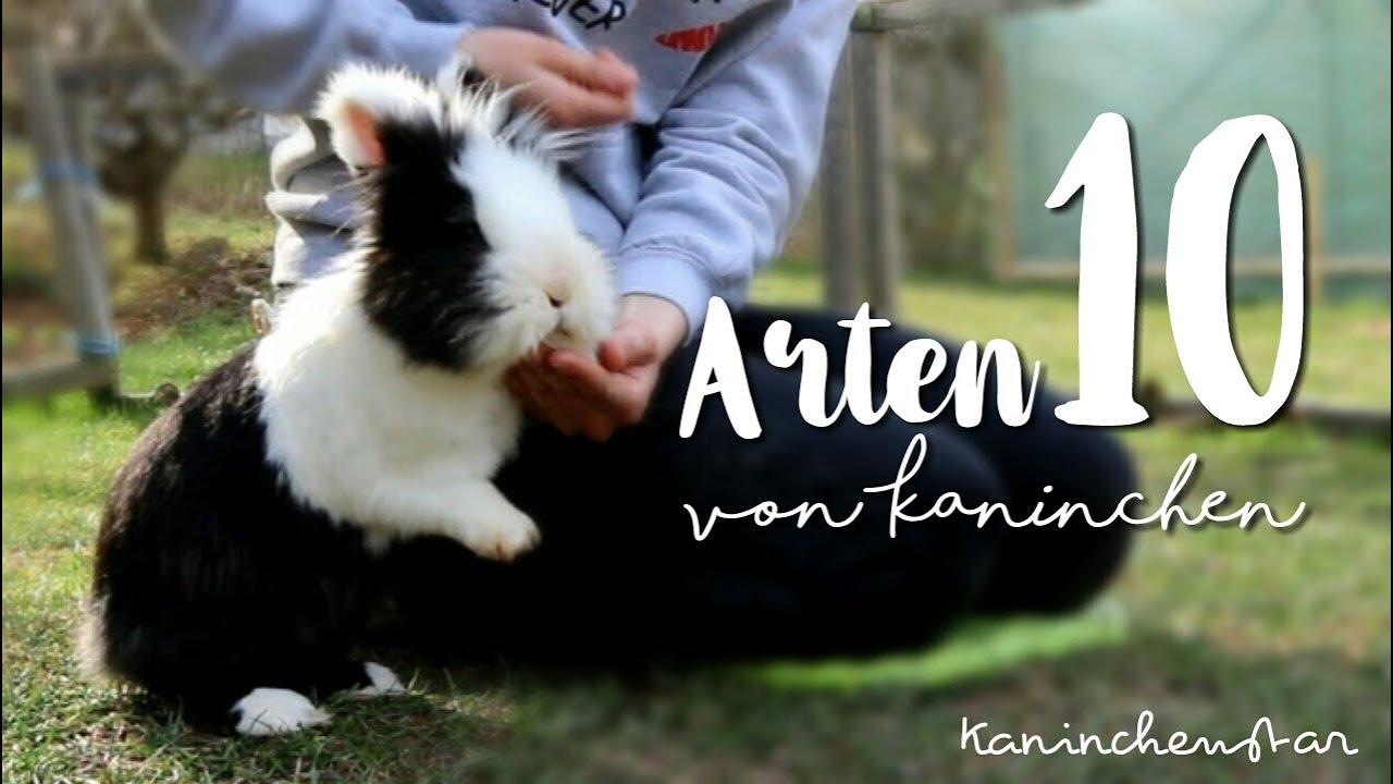 MORGENROUTINE im Frühling 🌻🐰 bei den Kaninchen   Kaninchenstar ...