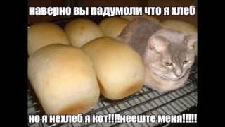 Кот хлеб что за мем