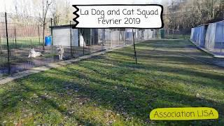 La Dog and Cat Squad / association LISA / Février 2019
