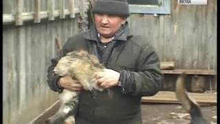 В Кирове зарегистрировали седьмой случай бешенства у животных(ГТРК Вятка)