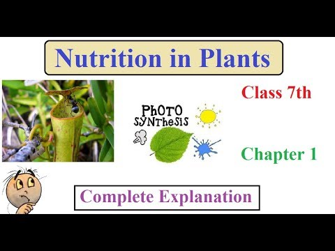 Nutrition in Plants | Chapter 1 Class 7th | Complete Explanation