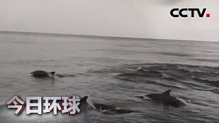 [今日环球] 宽吻海豚现身泰国斯米兰群岛 | CCTV中文国际