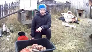 как правильно выделать кишки для колбасы
