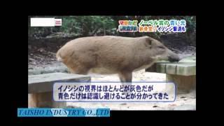 http://inosisi-taisaku.com 夜行性動物が恐れる青色LEDを活用したイノ...