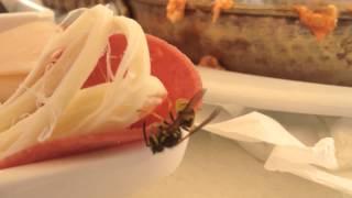 Eşek arısı belgesel1