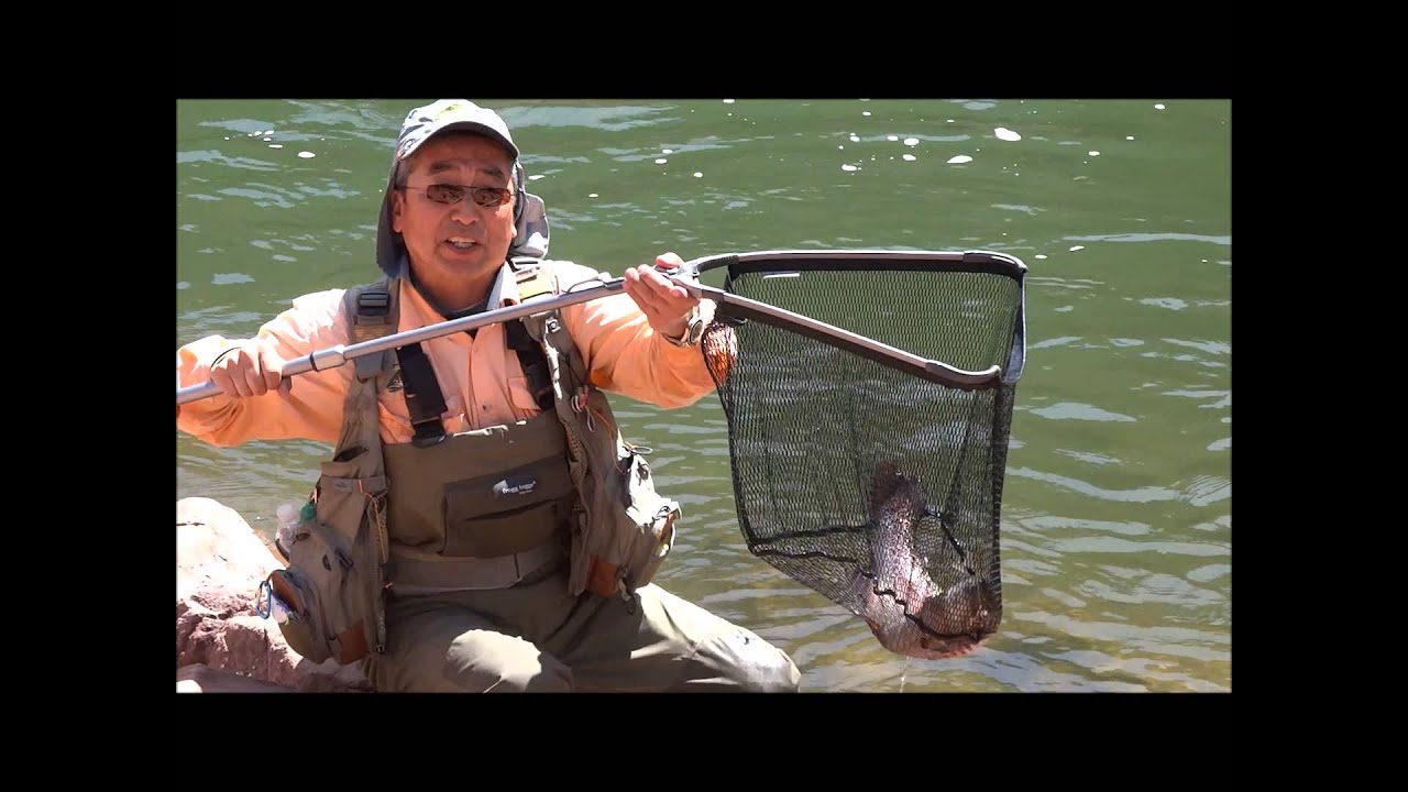 Big Trout Colorado Frying Pan River Fly Fishing Toilet
