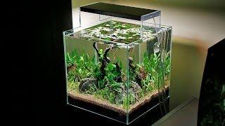 Best 5 Gallon Rimless Aquariums For Sale 2021 Reviews