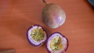Маракуйя, плод страсти  или passion fruit