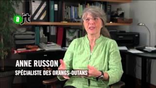 Sandra premier Orang Outan reconnu comme personne non humaine : Reportage de l