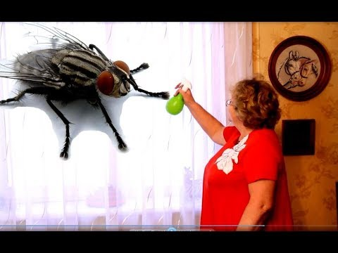 Как избавиться от мух в доме навсегда