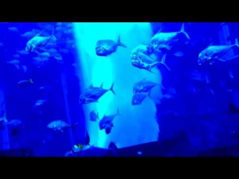Dubai Atlantis Hotel Aquarium 08.01.2013