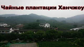 Чайные плантации Tea plantations Hangzhou. China.