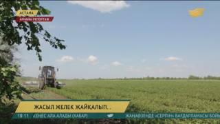 Елорда айналасындағы жасыл белдеудің аумағы 78 мың гектарға жетті