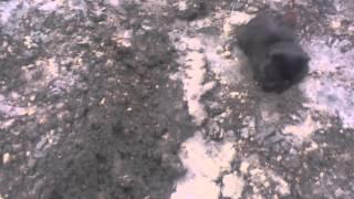 Казахстан. СКО. г. Тайынша, как проводят водопровод.... и не кто не убирает эту глину....