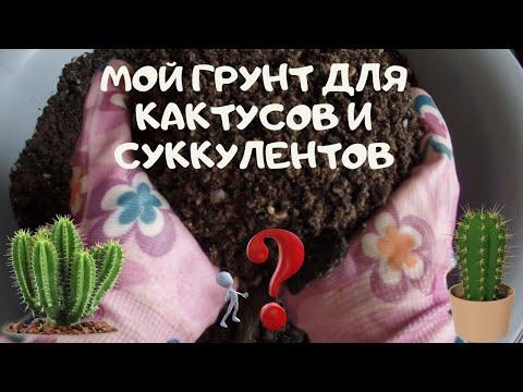 Какой грунт нужен для кактуса в домашних условиях