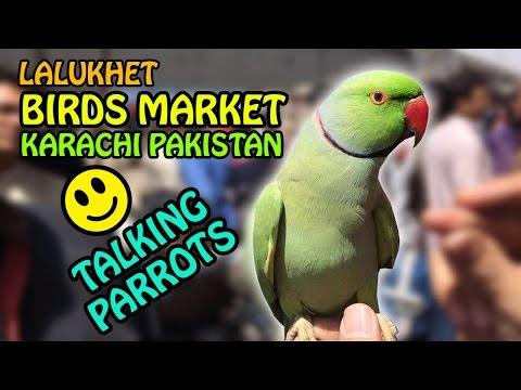 Birds Market Karachi Pakistan | Lalukhet Sunday Market visit | Video in Urdu/Hindi