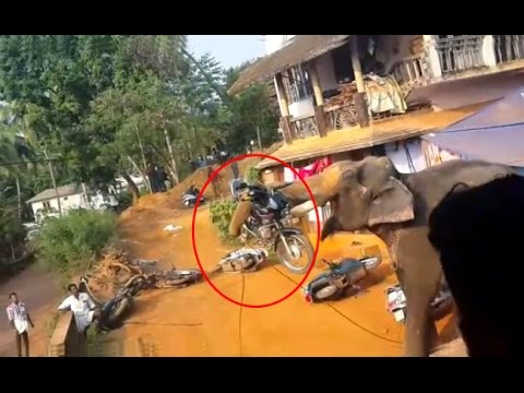 Elephant attack in Valanchery Kerala | Latest News