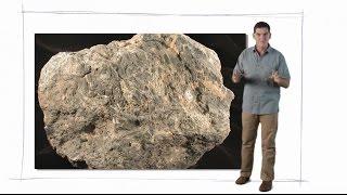 Dinosaur Train: Dinosaur Fossils thumbnail