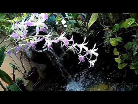 Desain Taman Anggrek Minimalis  taman anggrek menghiasi kolam koi minimalis youtube