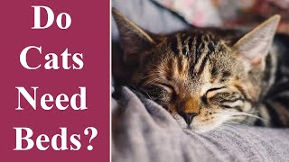 Do Cats Need Beds?